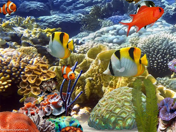 3d Fish Tank Wallpaper Inspirational 50 Best Aquarium Backgrounds