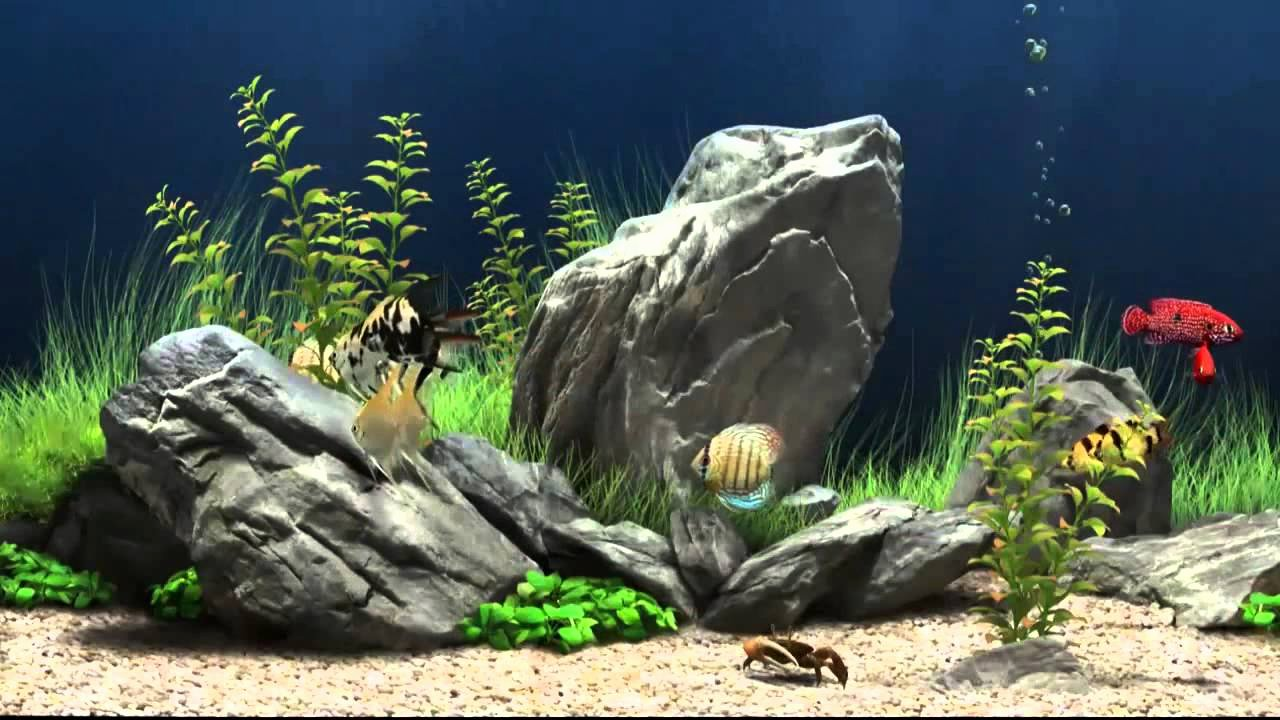 3d Fish Tank Wallpaper Inspirational Fish Tank Screensaver Most Refreshing Free 3d Fish Tank