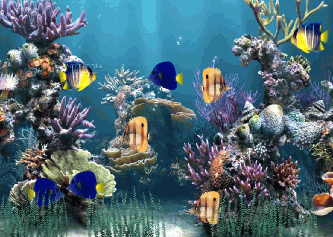 3d Fish Tank Wallpaper Inspirational Free 3d Fish Tank Wallpaper Wallpapersafari