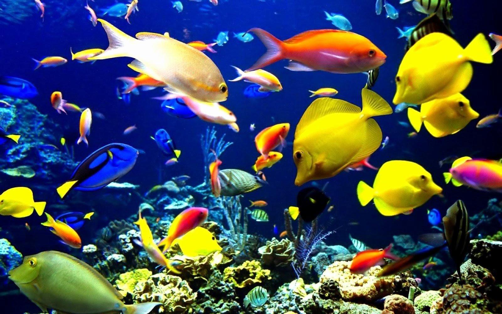 3d Fish Tank Wallpaper Luxury 20 Aquarium Hd Wallpapers and Freshwater Aquarium