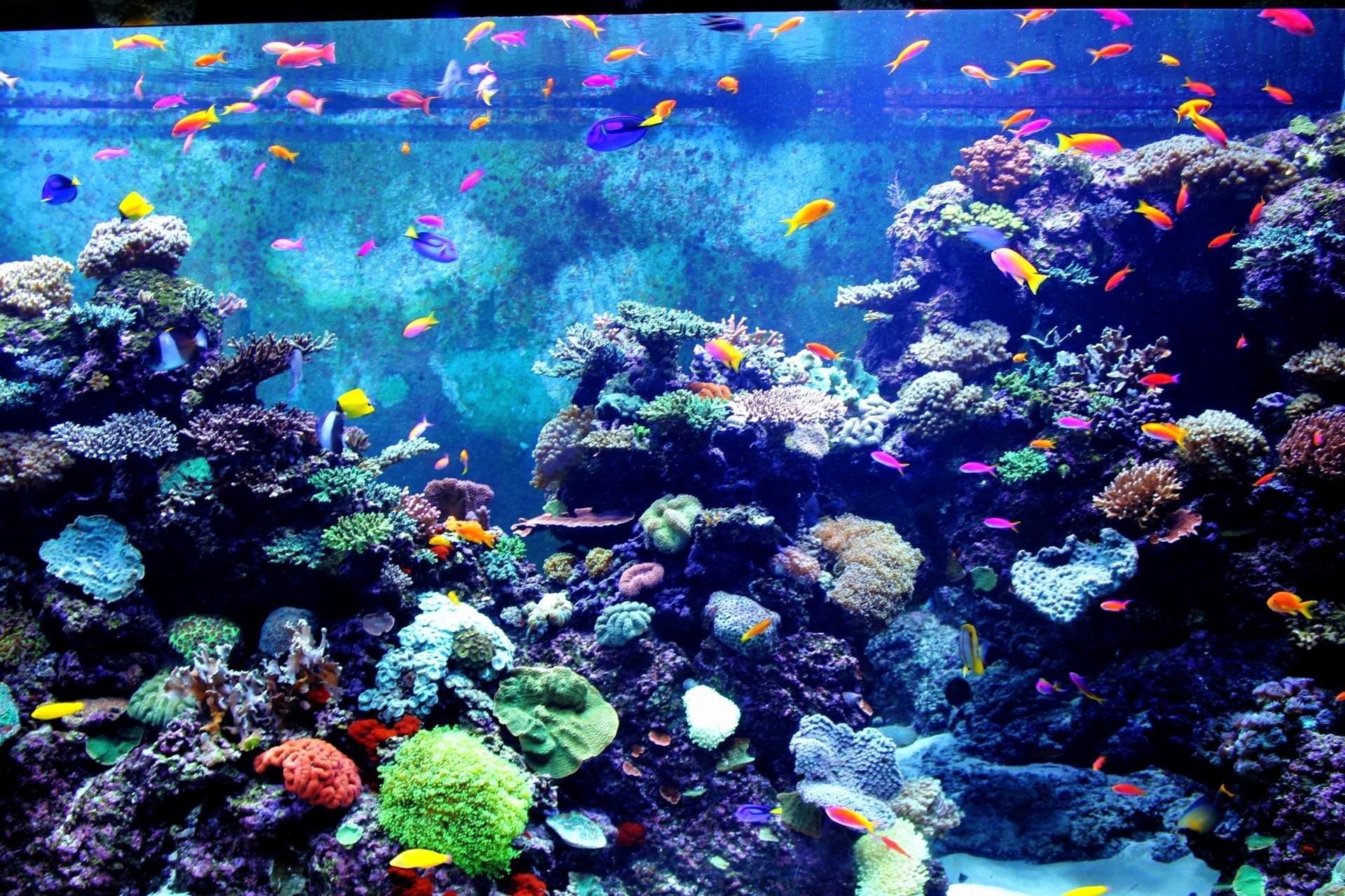 3d Fish Tank Wallpaper Luxury 3d Fish Tank Wallpaper 59 Images