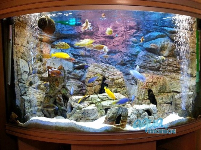 3d Fish Tank Wallpaper Luxury Aquarium Background for Juwel Aquarium Trigon 190 3d