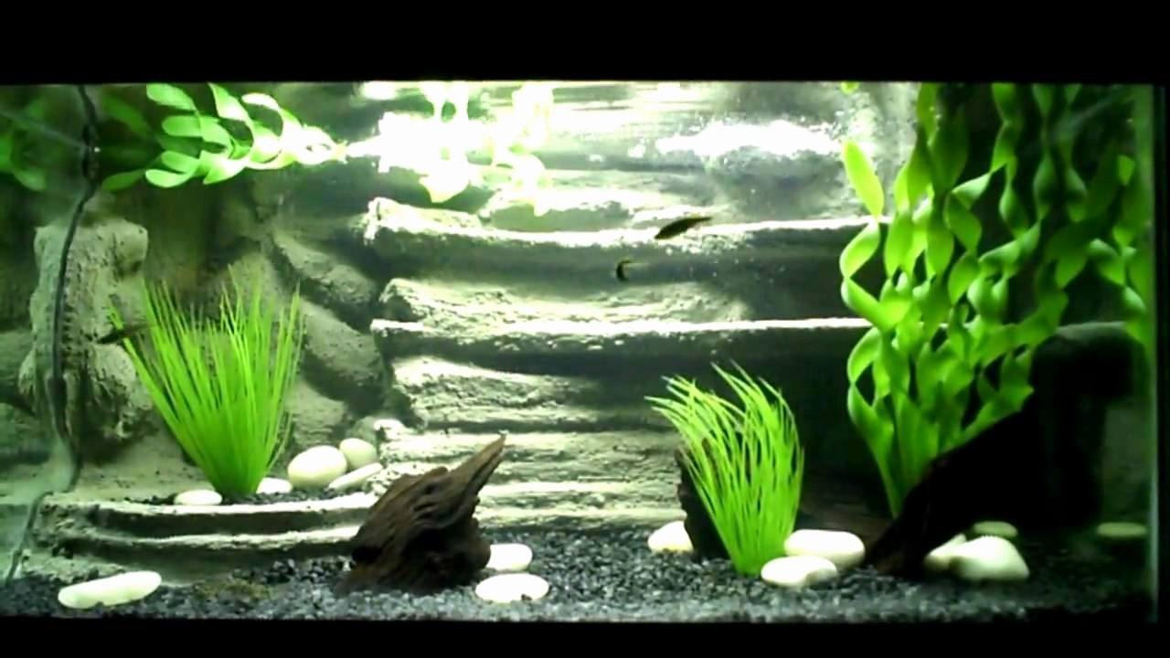 3d Fish Tank Wallpaper New 3d Aquarium Background