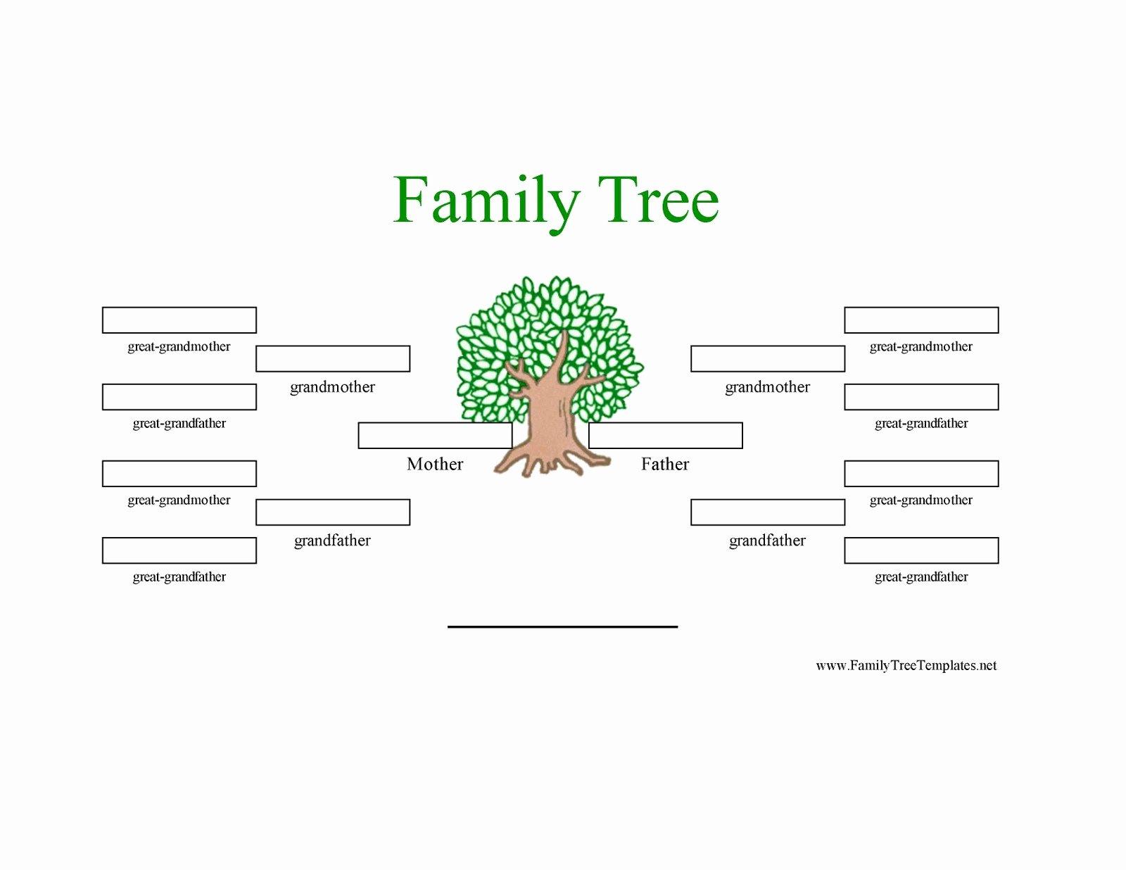 4 Generation Family Tree Template New Family Tree Template Family Tree Template 3 Generations