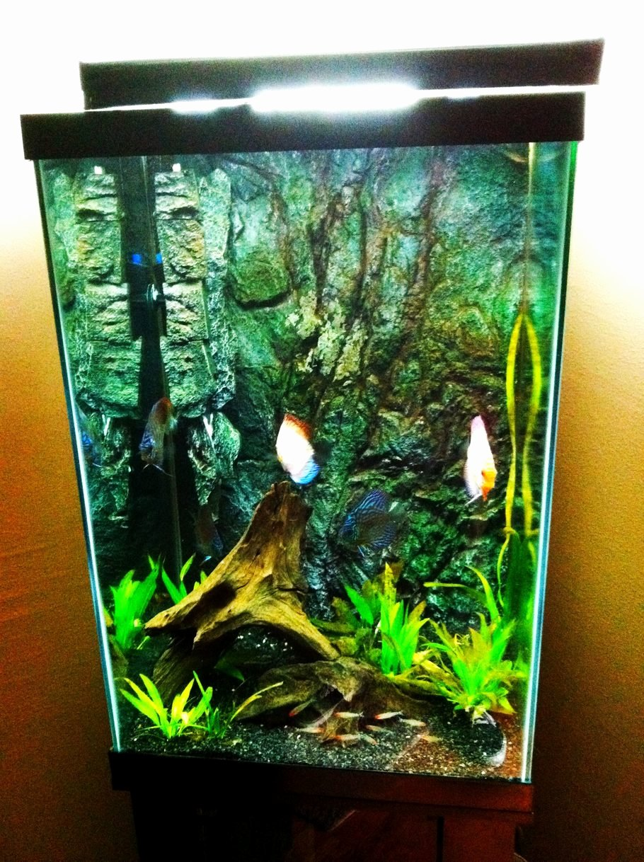 Aquarium Backgrounds 55 Gallon Awesome Joshmeneses S Freshwater Tanks Details and S