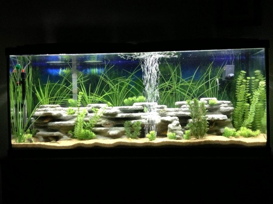 Aquarium Backgrounds 55 Gallon Beautiful Cichlid Aquarium Photos