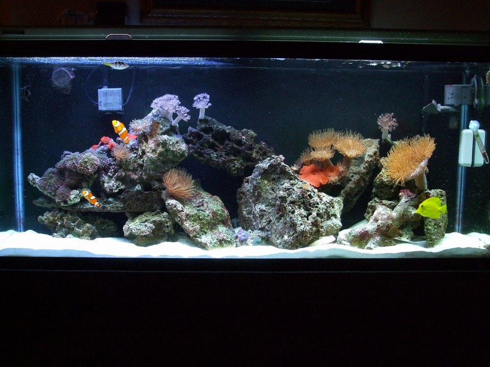 Aquarium Backgrounds 55 Gallon Inspirational Fish Aquarium Gallery Of Aquatic Designs