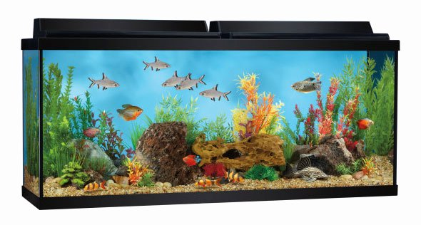 Aquarium Backgrounds 55 Gallon Inspirational the Best 55 Gallon Fish Tanks What Choice is for You