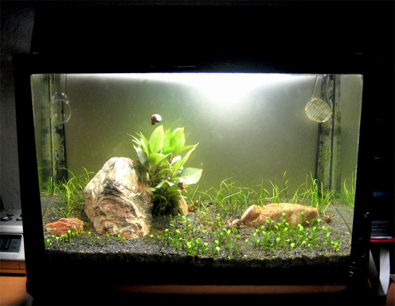 Aquarium Backgrounds 55 Gallon Lovely 2 5 Gallon Metaframe Aquarium