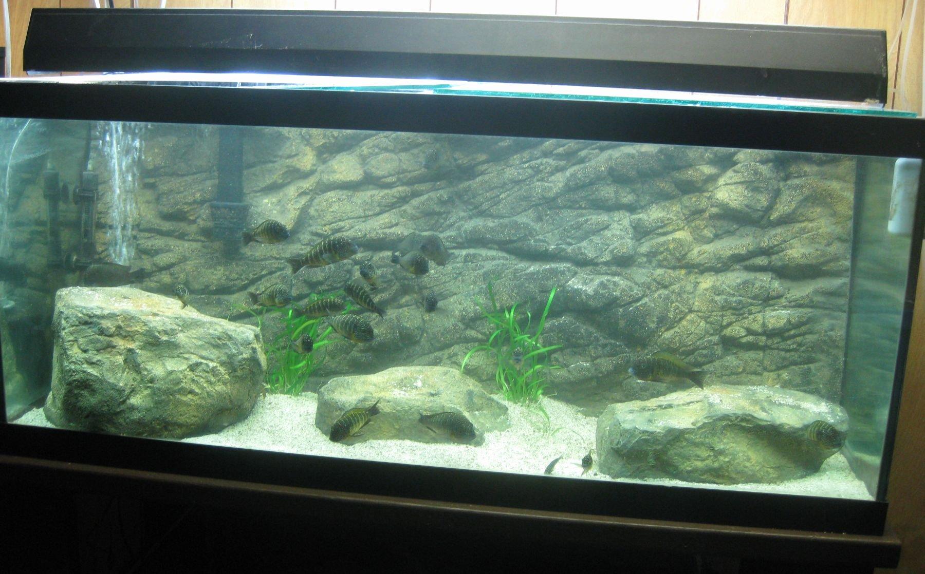 "Aquarium Backgrounds 55 Gallon New 3 D Aquarium Background Crevice 48""x18"" 55 75 Gal"