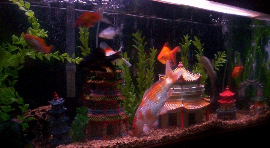 Aquarium Backgrounds 55 Gallon New Acez S Freshwater Tanks Id Full Version