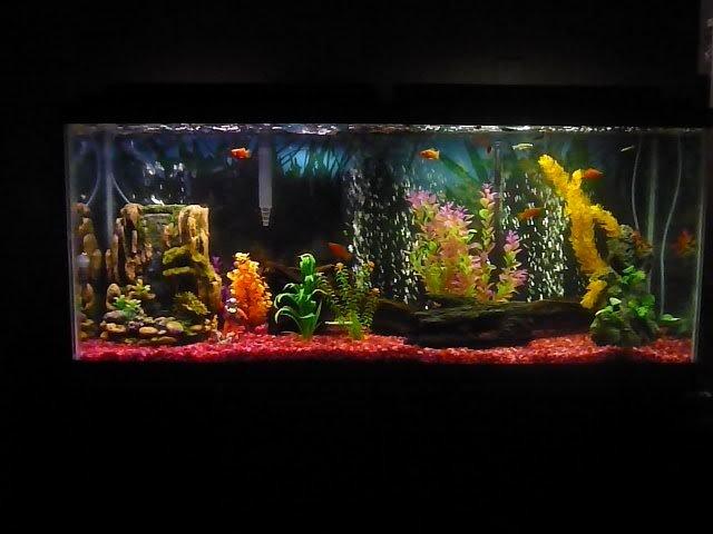 Aquarium Backgrounds 55 Gallon Unique 65 Best Images About Great Aquarium Decor On Pinterest