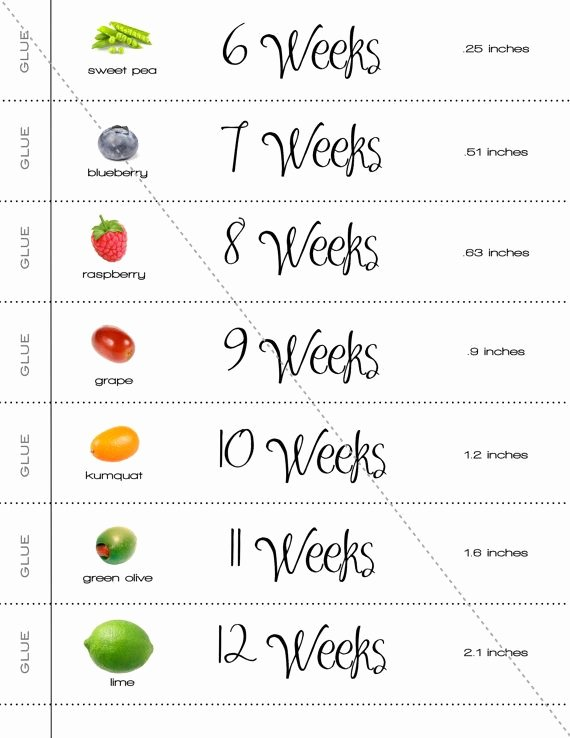 Baby Growth Rate Calculator New A Cute and Simple Way to Count Down the Weeks until Your