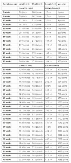 Baby Weight and Length Chart Awesome Pregnancy Things