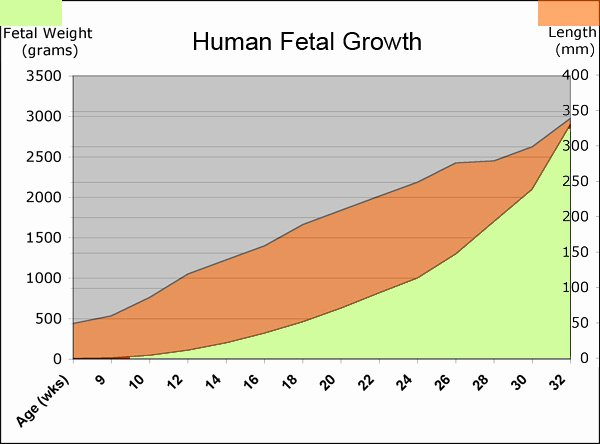 Baby Weight and Length Chart Fresh Fetus Growth Stages and Viability