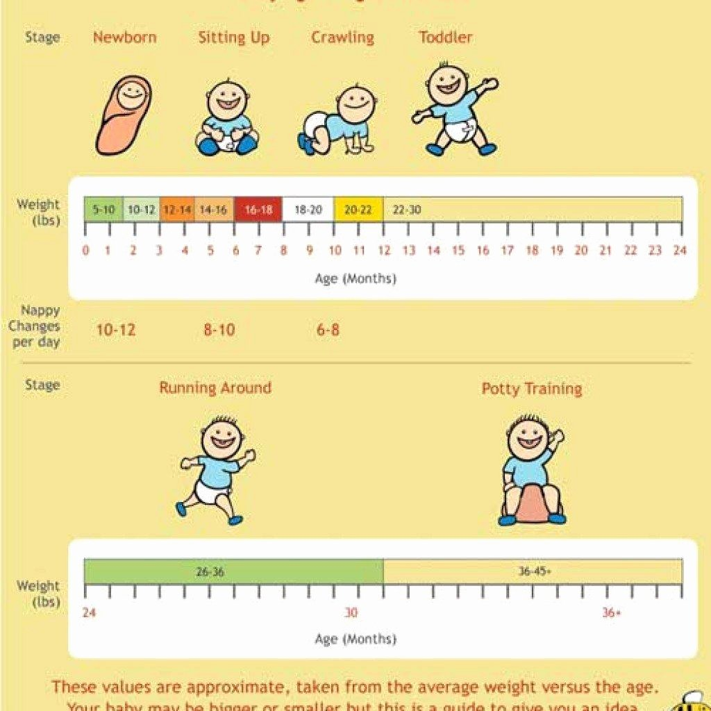 Baby Weight and Length Chart Unique 24 Baby Weight Charts Template Lab