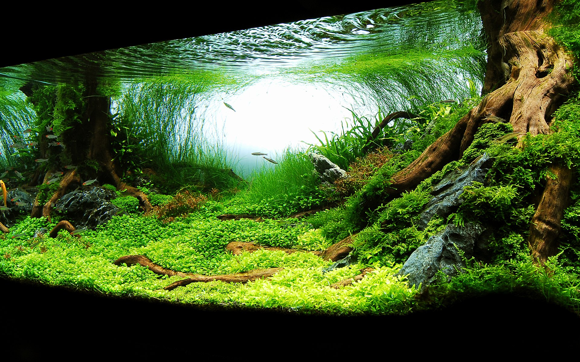 Background for Fish Tank Best Of Aquarium Backgrounds Download Free