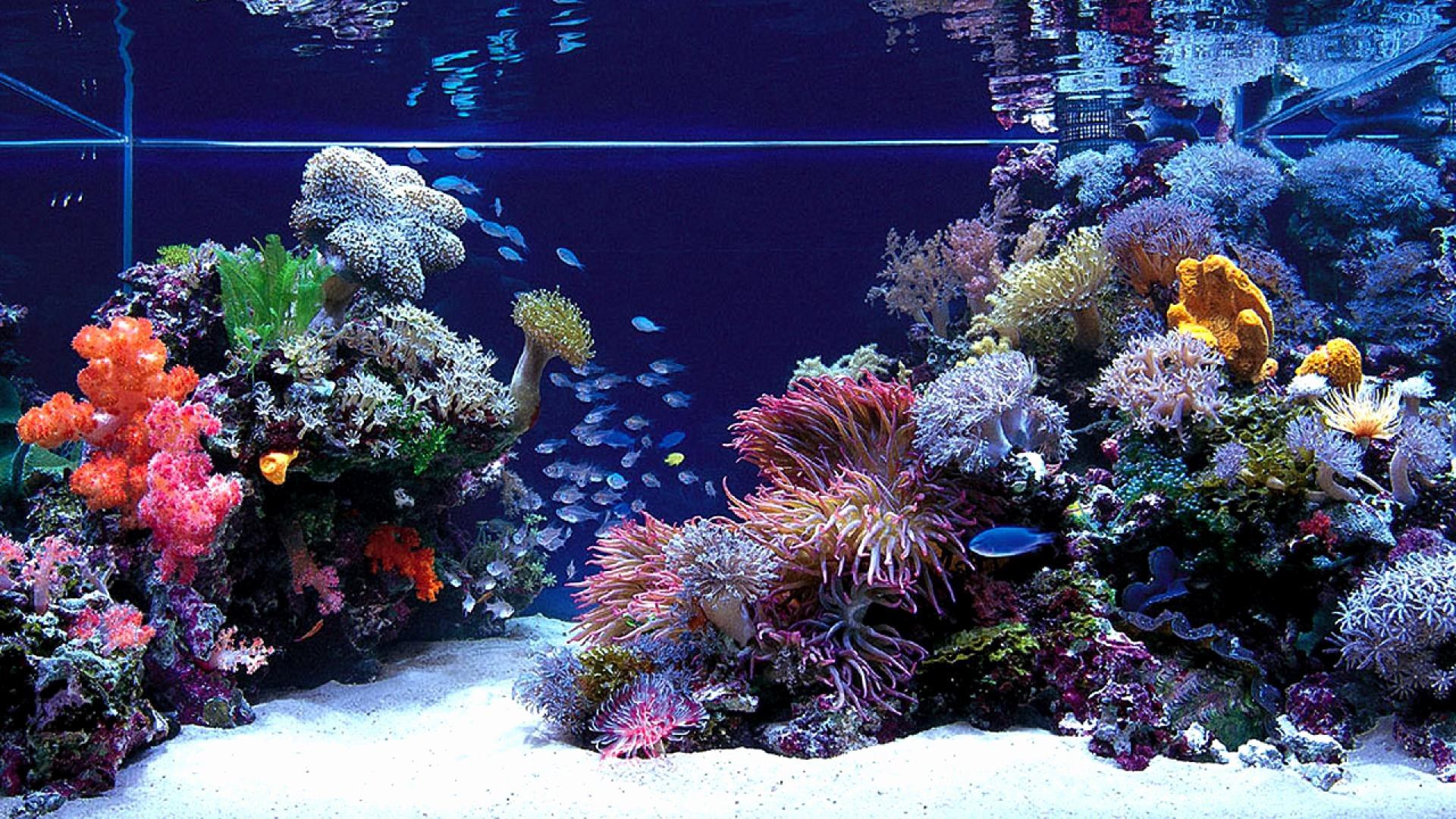 Background for Fish Tank Fresh Aquarium Hd Wallpapers