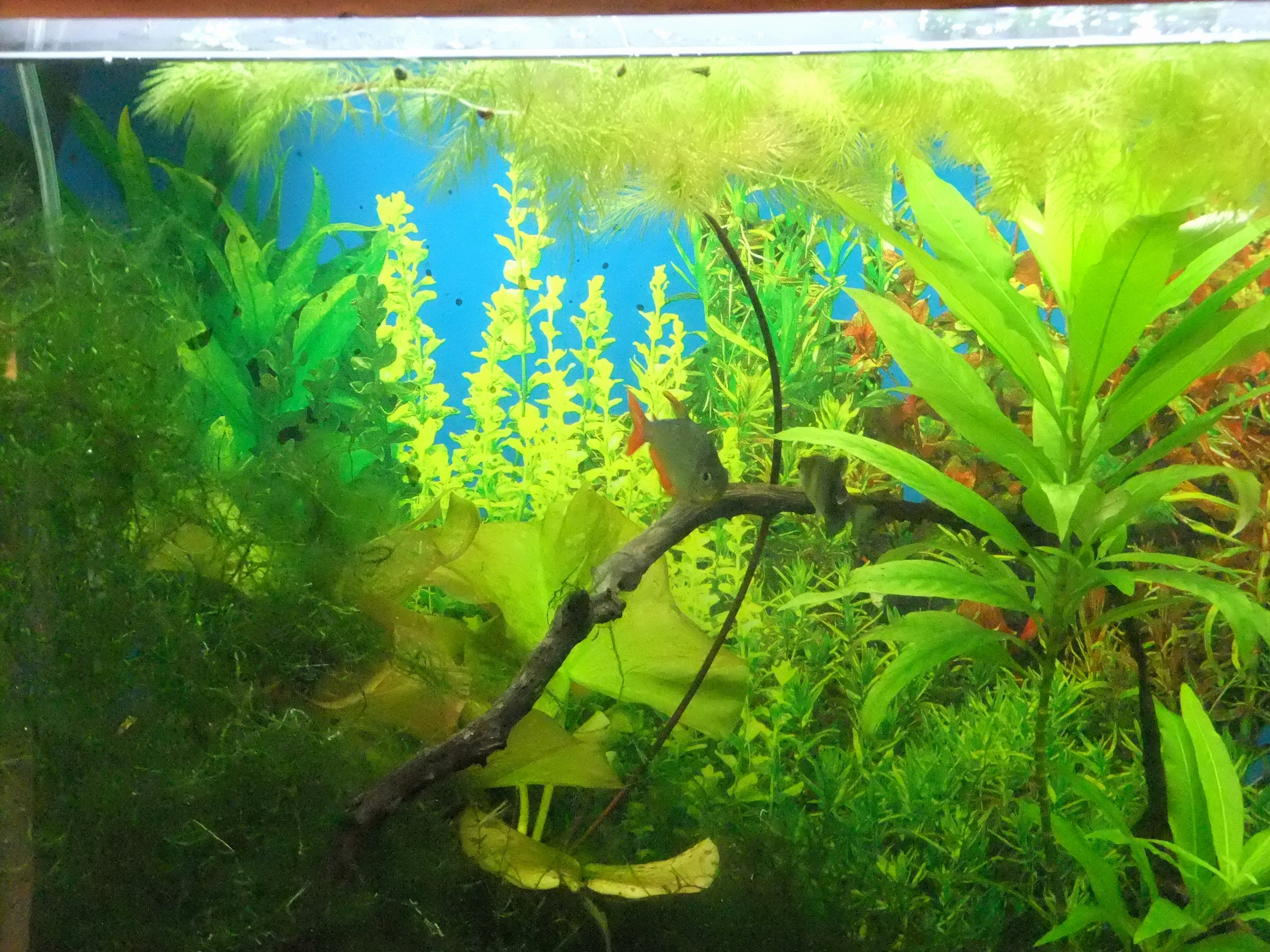 Background for Fish Tank Lovely Brighten Your Aquarium Background Seaview