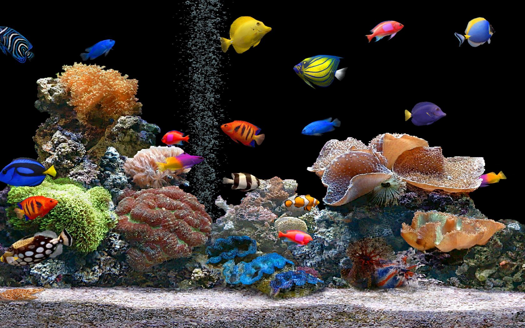 Background for Fish Tank Luxury Tropical Aquarium Wallpaper