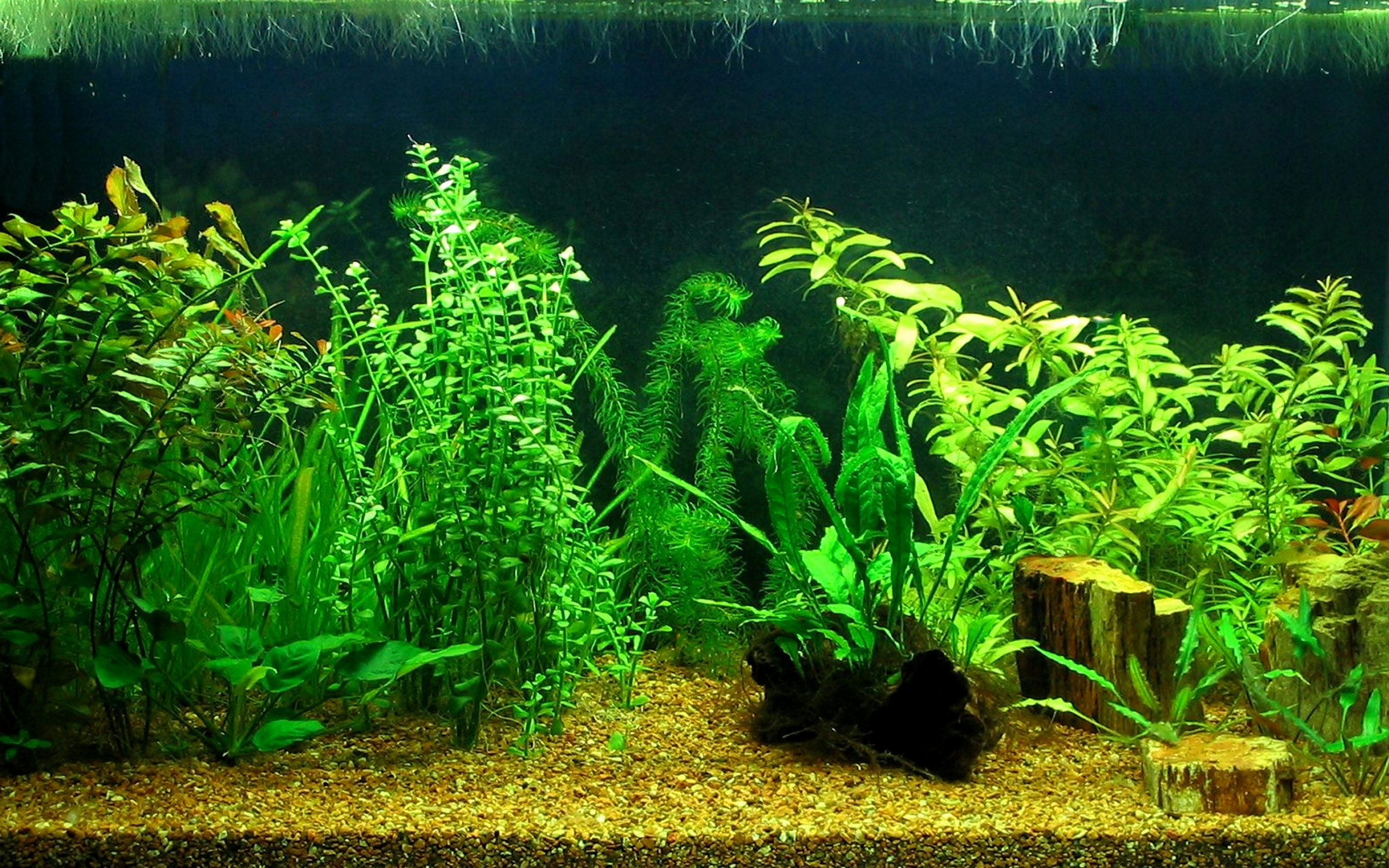 Backgrounds for Fish Tanks Awesome Aquarium Hd