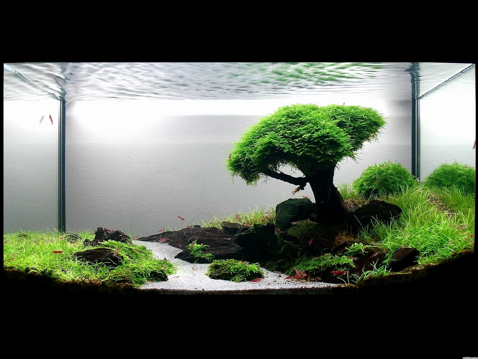 Backgrounds for Fish Tanks Elegant 33 attractive Aquarium Background – Technosamrat