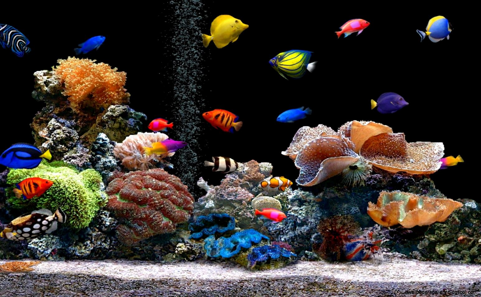 Backgrounds for Fish Tanks Elegant Tropical Fish Wallpapers