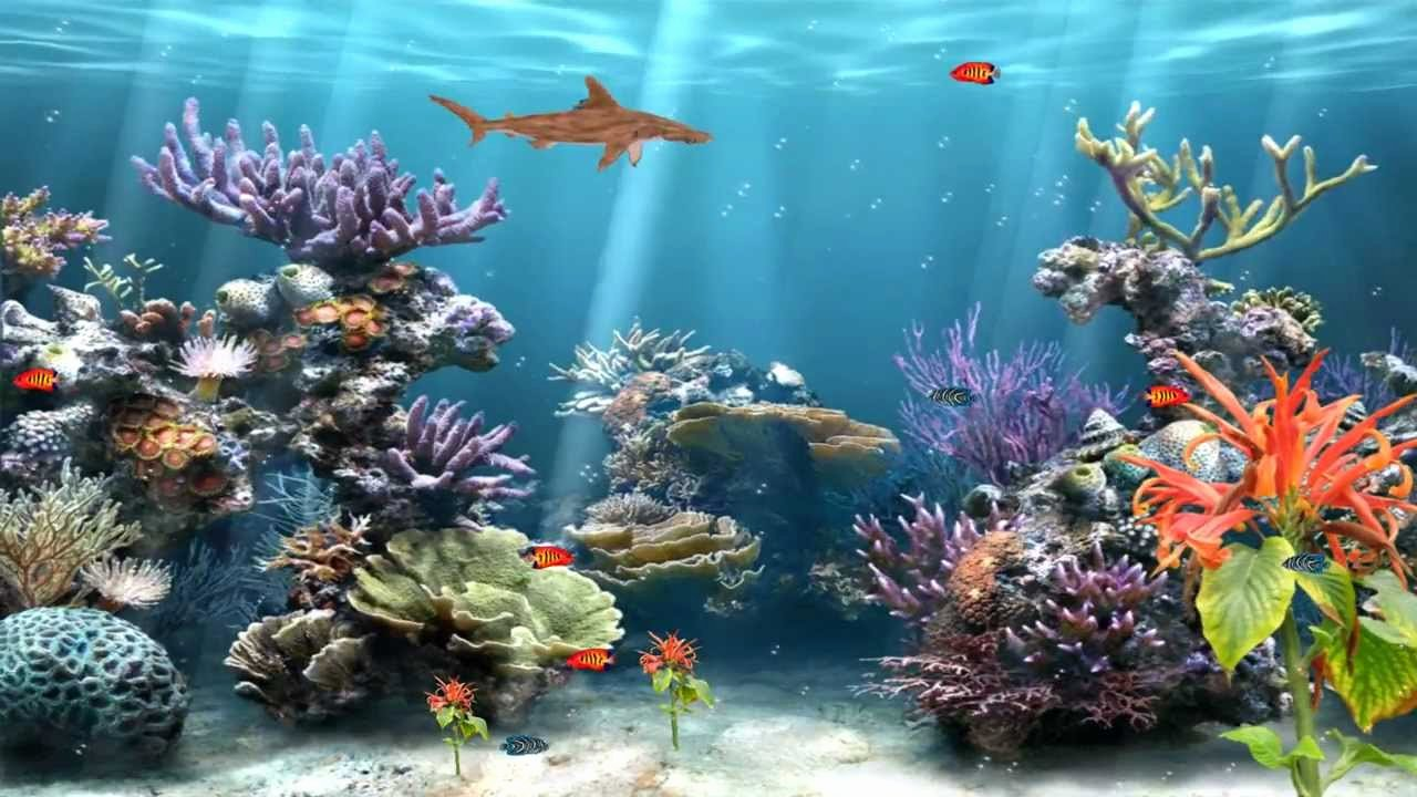 Backgrounds for Fish Tanks Inspirational Coral Reef Aquarium Animated Wallpaper