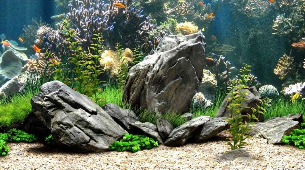 Backgrounds for Fish Tanks Luxury 50 Best Aquarium Backgrounds