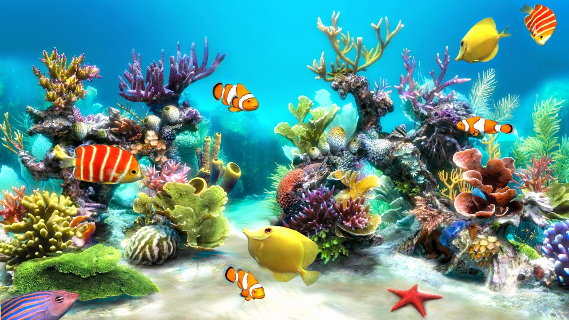 Backgrounds for Fish Tanks Unique Fish Tank Backgrounds
