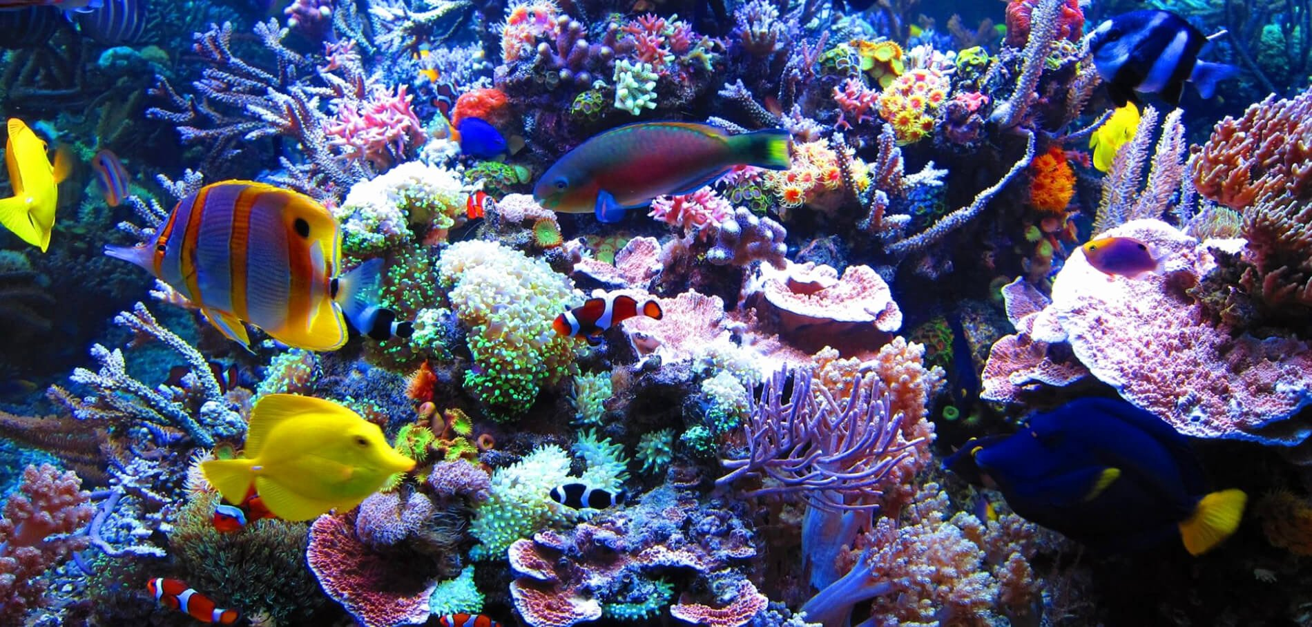Best Fish Tank Background Beautiful 5 Best All In E Saltwater Aquariums for Creating A
