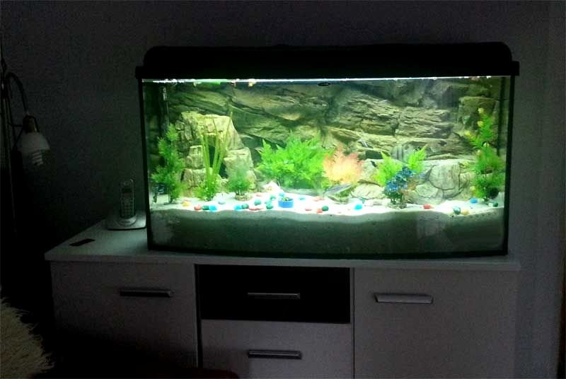 Best Fish Tank Background Best Of 120cm X 50cm High Fish Tank and 3d Rock Background In A
