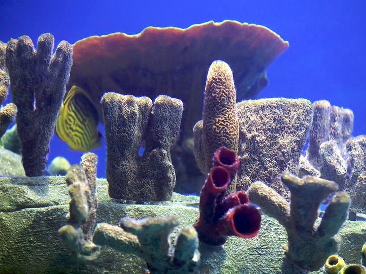 Best Fish Tank Background Best Of 15 Best Images About Aquarium Ideas and Design On