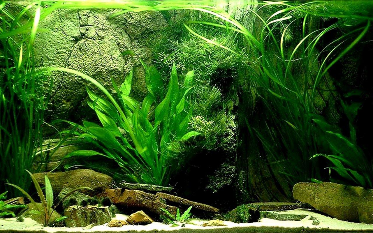Best Fish Tank Background Best Of Best 50 Freshwater Plants Background On Hipwallpaper