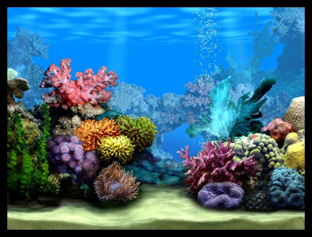 Best Fish Tank Background Best Of the Empty Fish Tank