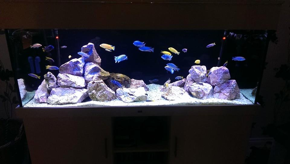 Best Fish Tank Background Elegant Background Colour