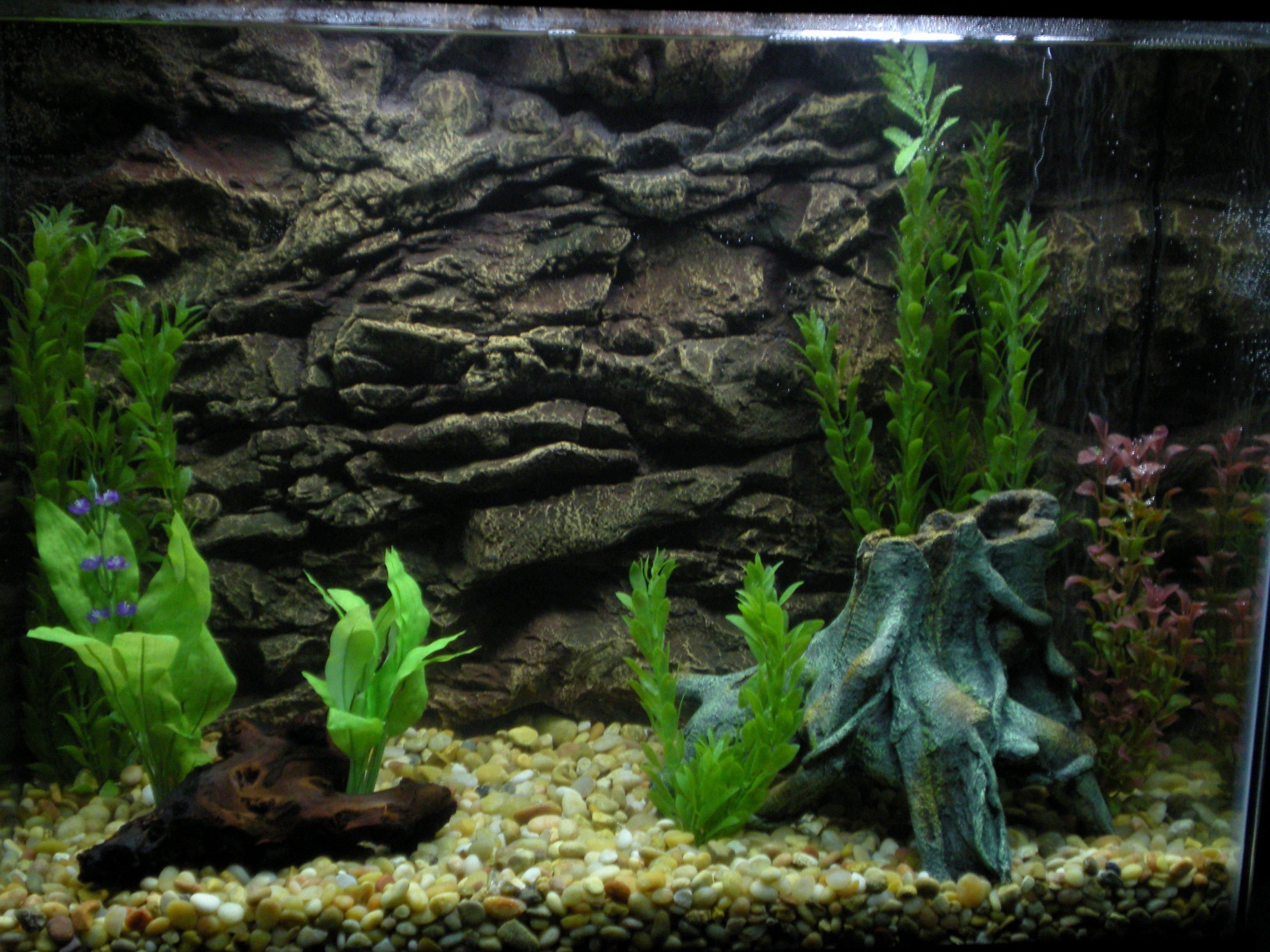 Best Fish Tank Background Fresh 33 attractive Aquarium Background – Technosamrat