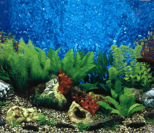 Best Fish Tank Background Fresh Fish Tank Wallpaper Wallpapersafari