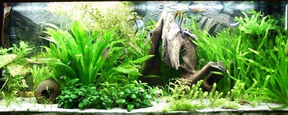 Best Fish Tank Background Inspirational 50 Best Aquarium Backgrounds