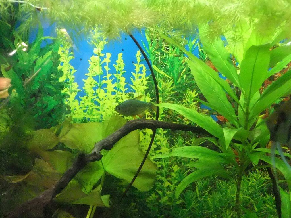 Best Fish Tank Background Inspirational Betta Fish Aquarium Backgrounds