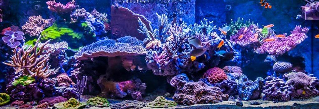 Best Fish Tank Background Lovely Marine Aquarium Backgrounds 1000 Aquarium Ideas