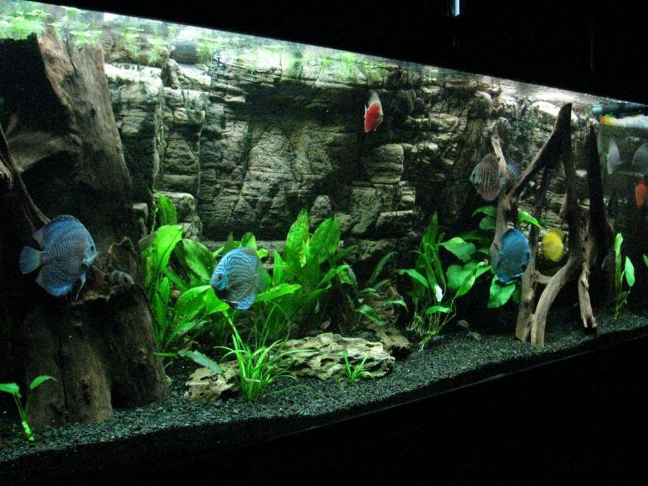 Best Fish Tank Background Lovely Our 155 Gallon Planted Aquarium with Aquaterra 3d