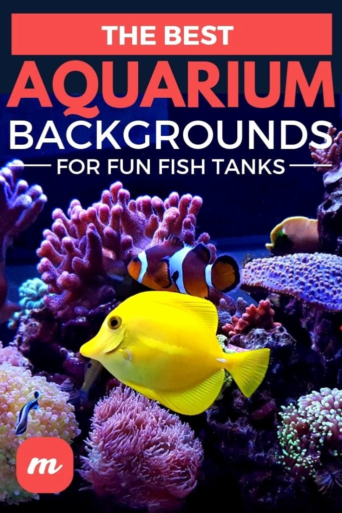 Best Fish Tank Background Lovely the Best Aquarium Backgrounds for Fun Fish Tanks
