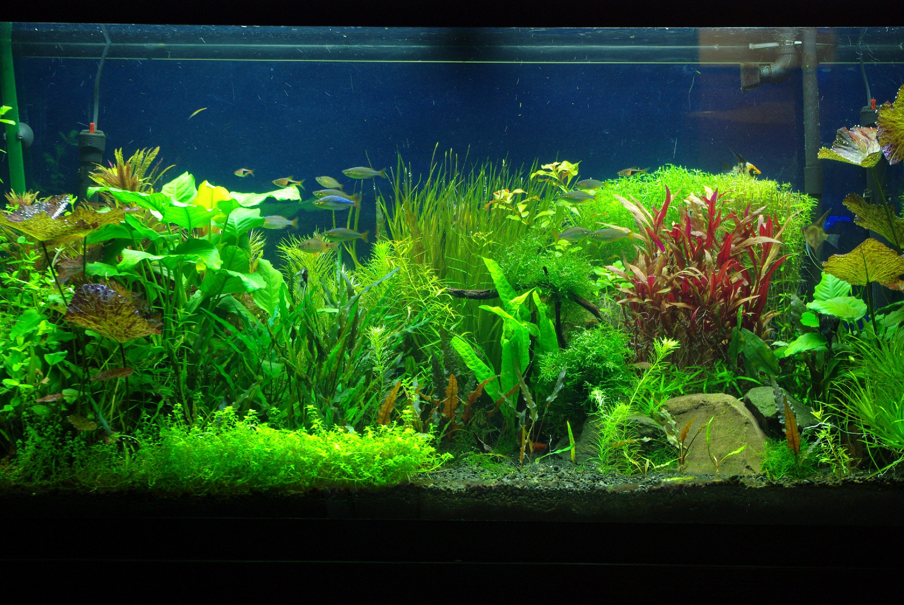Best Fish Tank Background Luxury 33 attractive Aquarium Background – Technosamrat