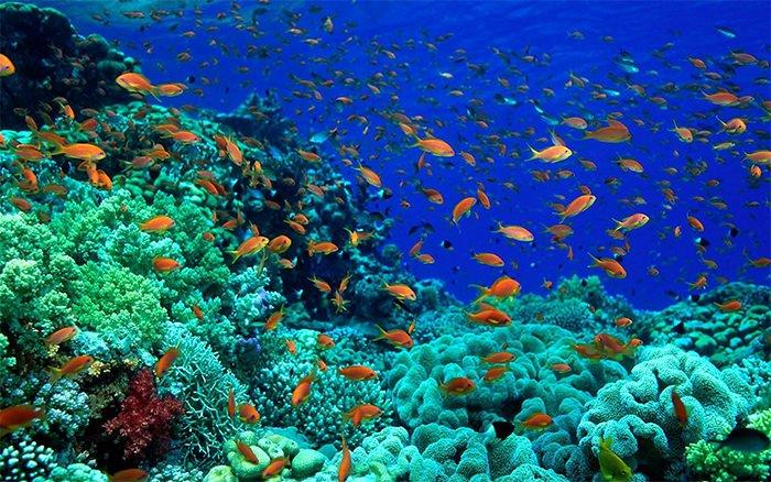 Best Fish Tank Background Unique 50 Best Aquarium Backgrounds