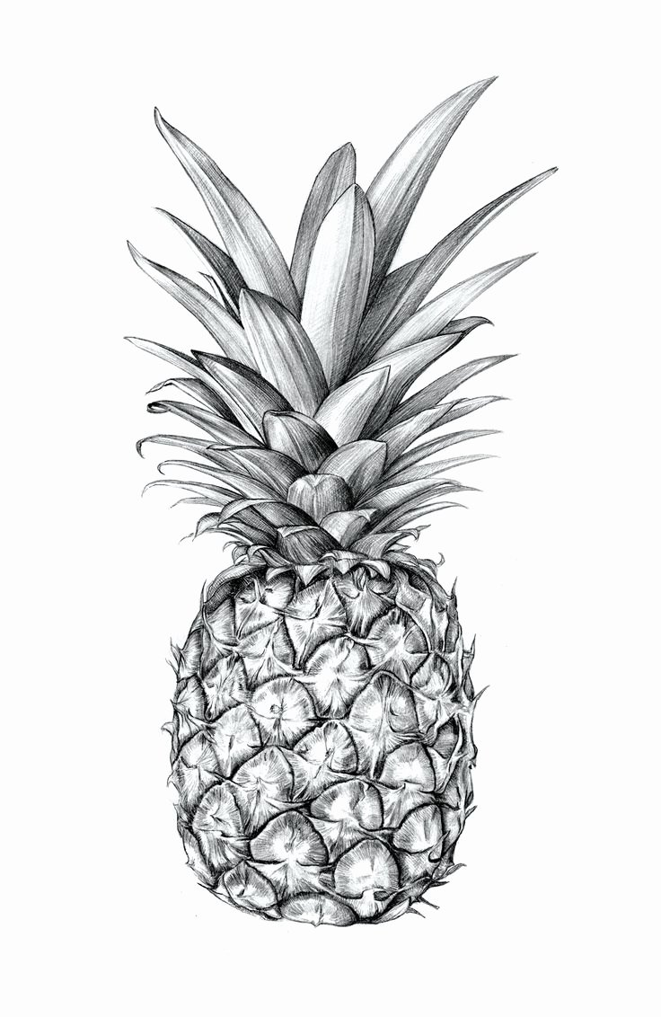 Black and White Designs Art Luxury Sibling & Co Illustrated Pineapple