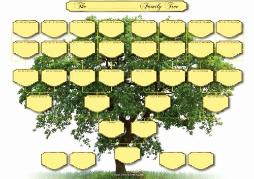 Blank Family Tree Poster Elegant Family Tree Chart 5 Generations Amazon My