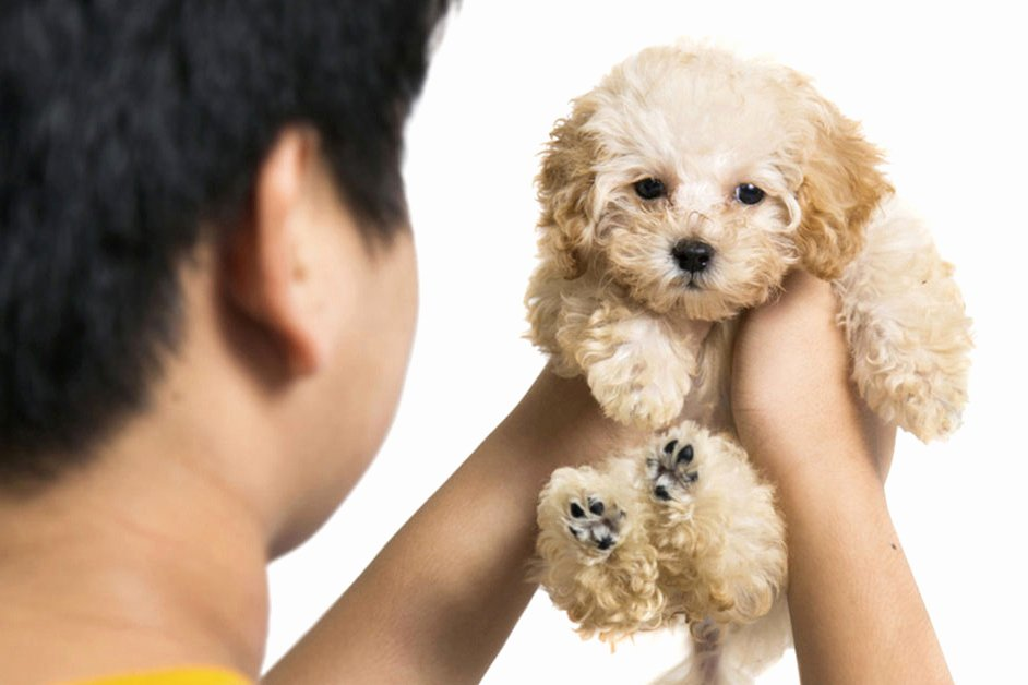 Breeding Contracts for Puppies Luxury Preparing A Contract for Puppy Buyers – American Kennel Club