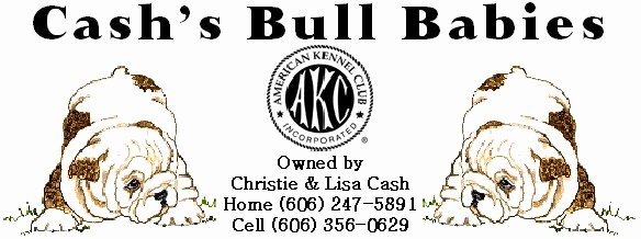 Breeding Contracts for Puppies Unique Service Contract Akc Bulldog Stud Service Akc Bulldog