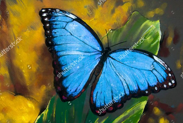 Butterfly Pictures to Paint Lovely 10 Beautiful butterfly Painting Ideas